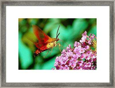 Georgian Moth  Framed Print by Aron Chervin