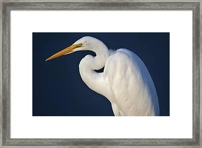 Great White Egret Framed Print by Paulette Thomas