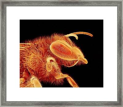 Honey Bee, Sem Framed Print by Susumu Nishinaga