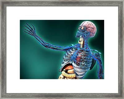 Human Anatomy, Artwork Framed Print by Carl Goodman