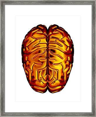 Human Brain, Artwork Framed Print by Pasieka