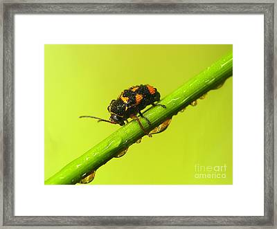 Insect Framed Print by Odon Czintos