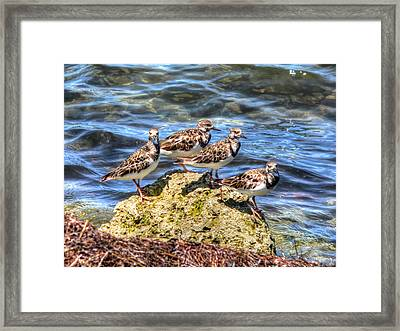 Framed Print featuring the photograph 4 by Joetta West