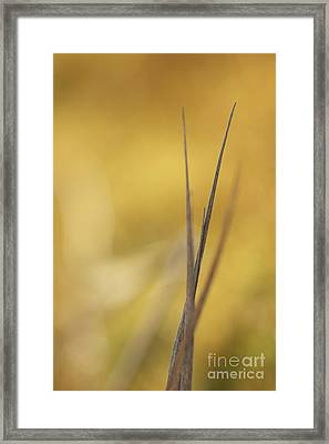 Leaf Framed Print by Odon Czintos