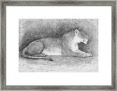 Lion Framed Print by Granger