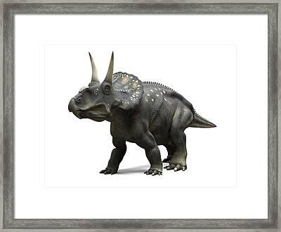 Nedoceratops Dinosaur, Artwork Framed Print by Sciepro