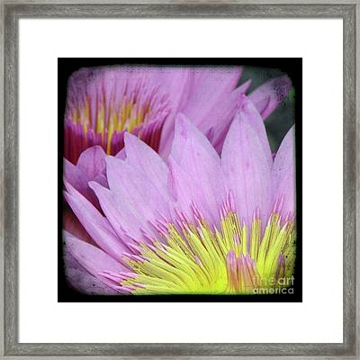 Photography Floral Art  Framed Print by Ricki Mountain