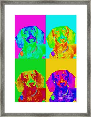 Pop Art Dachshund Framed Print by Renae Laughner