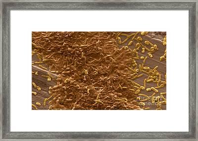 Potable Water Biofilm Framed Print