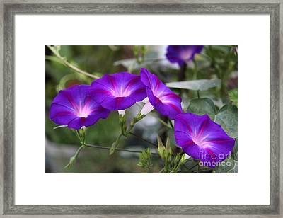 4 Purples Framed Print by Yumi Johnson