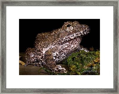 Rusty Robber Frog Framed Print