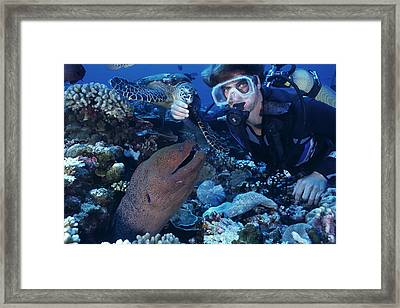 Scuba Diver Framed Print by Alexis Rosenfeld