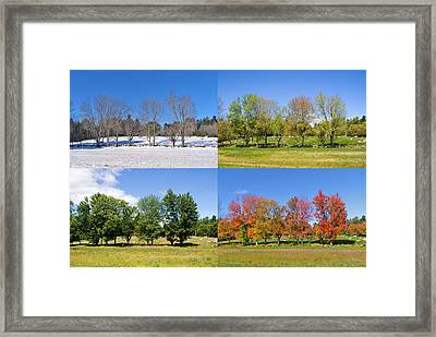 4 Season Trees Framed Print
