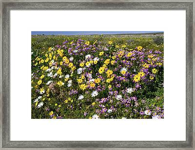 South African Wildflowers Framed Print by Bob Gibbons