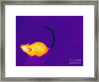 Thermogram Of A Mouse Framed Print