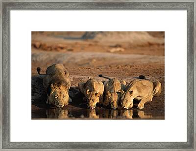 Untitled Framed Print by Beverly Joubert