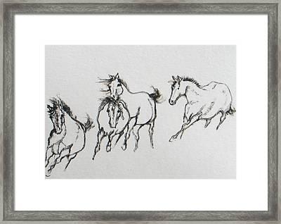 4 Wild Horses  Framed Print