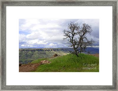 420 Tree Framed Print by David Taylor