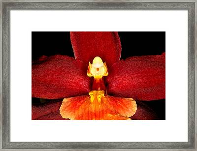 Exotic Orchids Of C Ribet Framed Print