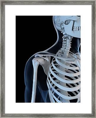 Upper Body Bones, Artwork Framed Print by Sciepro