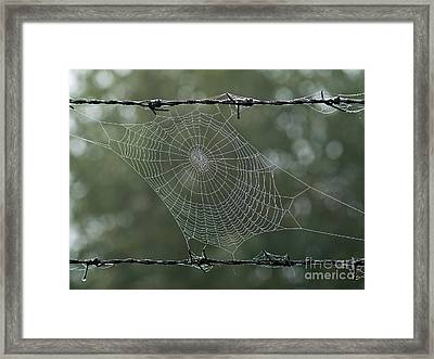 Spiderweb Framed Print