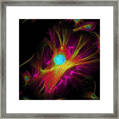 Cell Structure Framed Print by David Becker