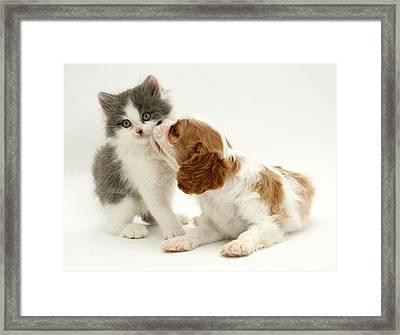 Dog And Cat Framed Print by Jane Burton