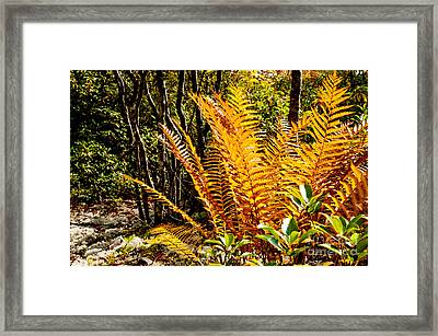 Fall Color Fern Framed Print by Thomas R Fletcher
