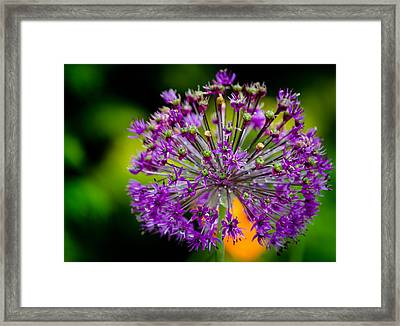 Flowers Framed Print by Mike Rivera