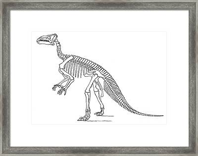 Iguanodon, Mesozoic Dinosaur Framed Print by Science Source