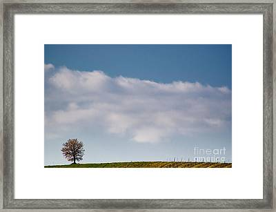 Lonely Tree Framed Print by Mats Silvan