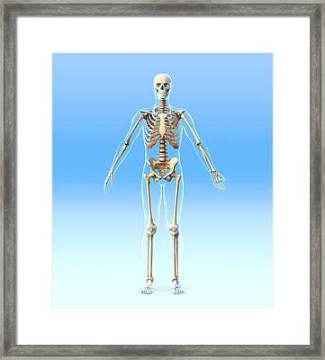 Male Skeleton, Artwork Framed Print