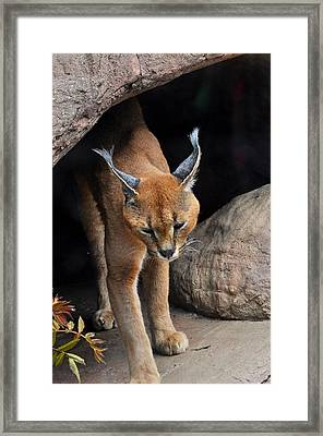 Mix Selection Of Animals  Framed Print by Puzzles Shum