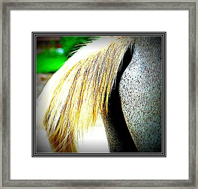 Mule Tail Waging Framed Print by Anand Swaroop Manchiraju