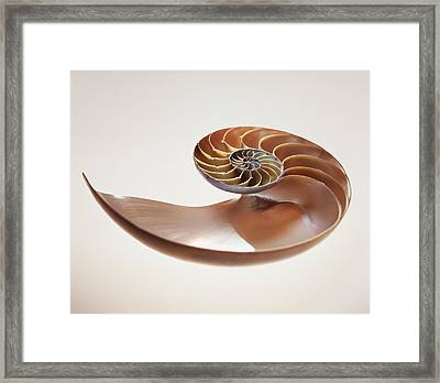 Nautilus Shell Framed Print by Lawrence Lawry