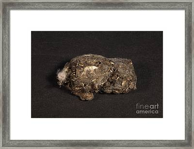 Owl Pellet Framed Print by Ted Kinsman