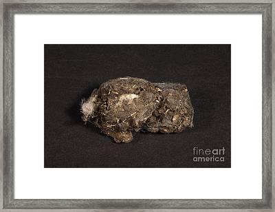 Owl Pellet Framed Print by Ted Kinsman