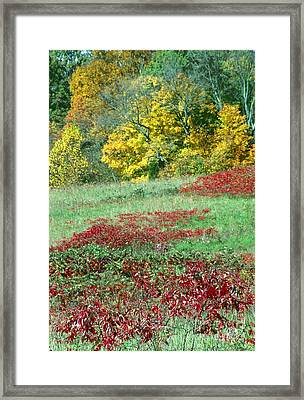 Patoka Lake - Indiana Framed Print by Jack R Brock
