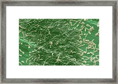 Potable Water Biofilm Framed Print
