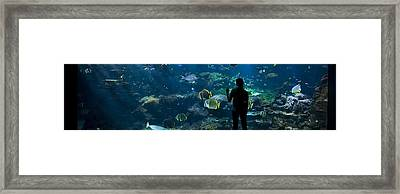 Sea-life Centre, France Framed Print by Alexis Rosenfeld