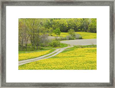 Spring Farm Landscape With Dandelion Bloom In Maine Framed Print by Keith Webber Jr