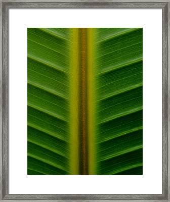 Wild Banana Leaf Framed Print by Werner Lehmann