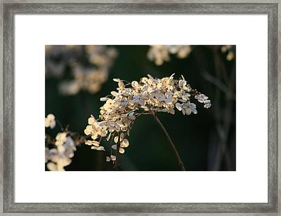 Winter Beauty Framed Print by Valia Bradshaw
