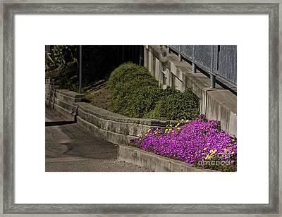 524 Pr Three Bushes Framed Print by Chris Berry