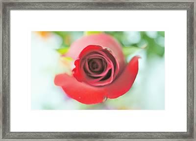Rose For You Framed Print by Gornganogphatchara Kalapun