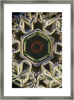 Snowflake Framed Print by Ted Kinsman