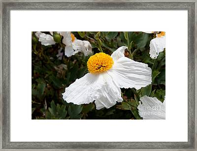 Along Big Sur Framed Print