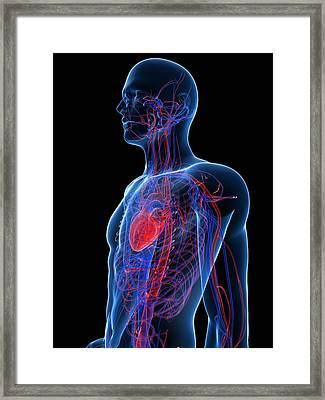 Cardiovascular System, Artwork Framed Print by Sciepro