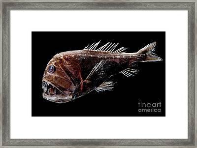Fangtooth Framed Print by Dant� Fenolio