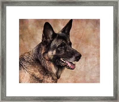 German Shepherd Framed Print by Jai Johnson